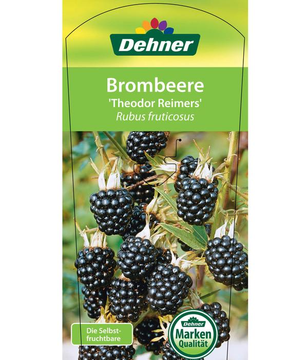 Dehner Brombeere 'Theodor Reimers'
