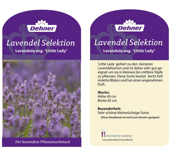 Dehner Downderry Lavendel Little Lady Dehner