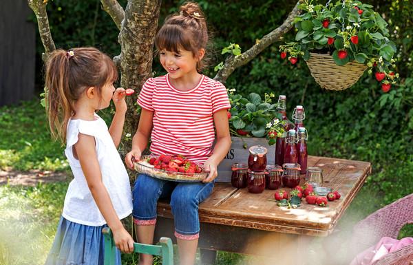 Dehner Erdbeere 'Beerenwunder', 8er Schale