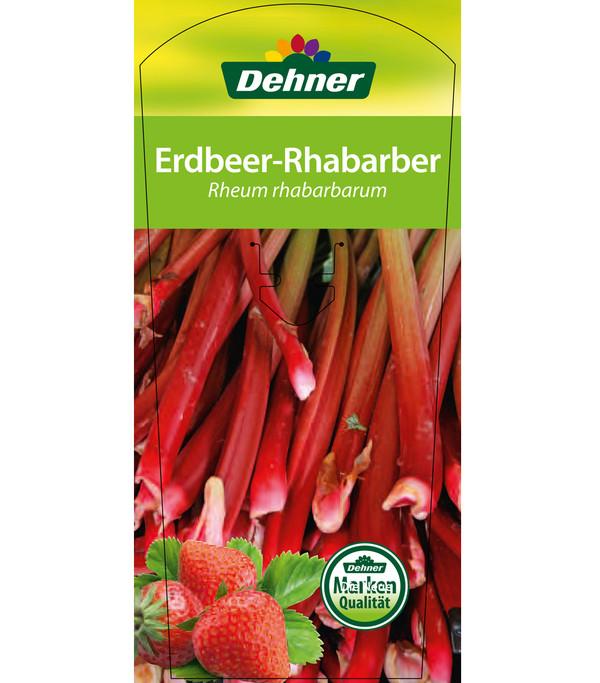 Dehner Erdbeerrhabarber
