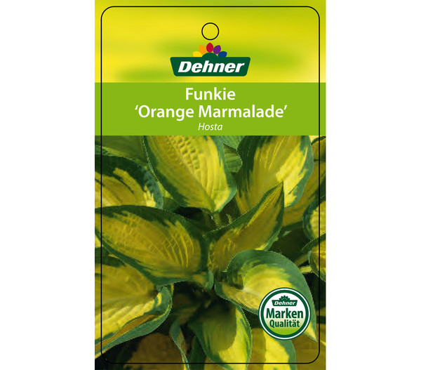 Dehner Funkie 'Orange Marmalade'