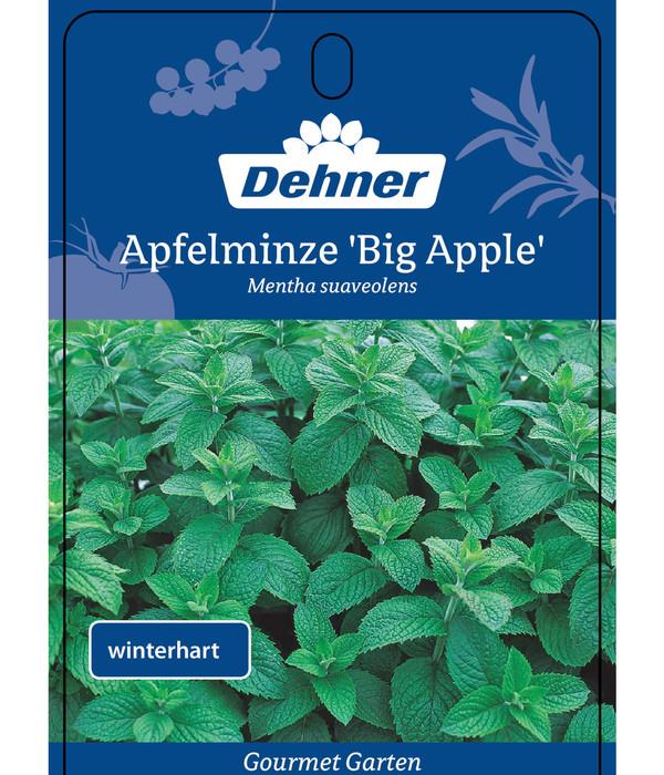 Dehner Gourmet Garten Apfelminze 'Big Apple'