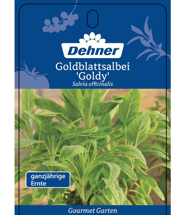 Dehner Gourmet Garten Goldblattsalbei 'Goldy'