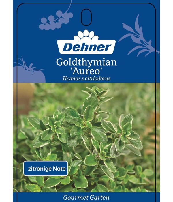 Dehner Gourmet Garten Goldthymian 'Aureum'