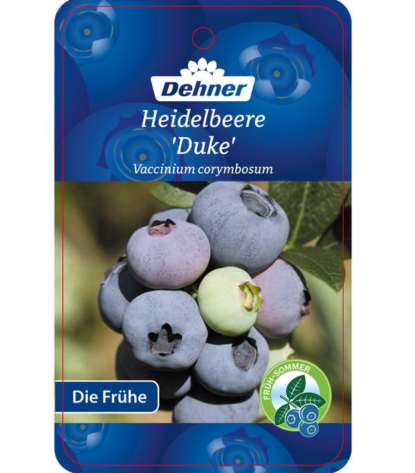 Dehner Gourmet Garten Heidelbeere 'Duke'