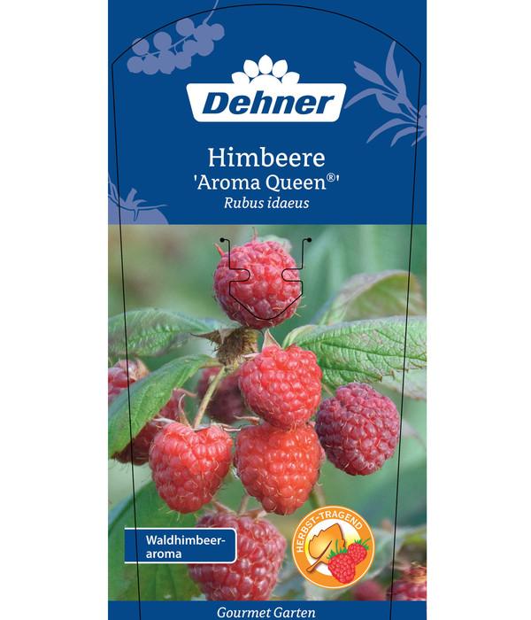 Dehner Gourmet Garten Himbeere 'Aroma Queen®'