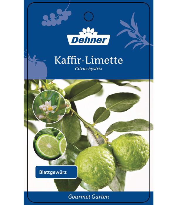 Dehner Gourmet Garten Kaffir-Limette - Kaffernlimette