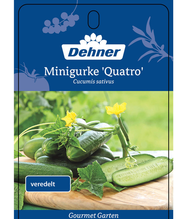 Dehner Gourmet Garten Minigurke 'Quatro', veredelt