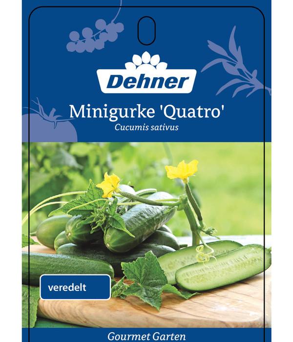Dehner Gourmet Garten Minigurke, veredelt