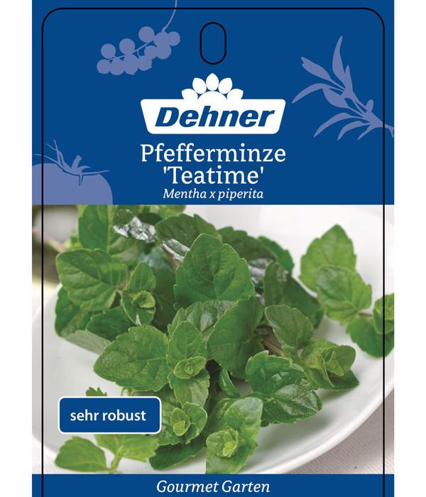 Dehner Gourmet Garten Pfefferminze 'Teatime'