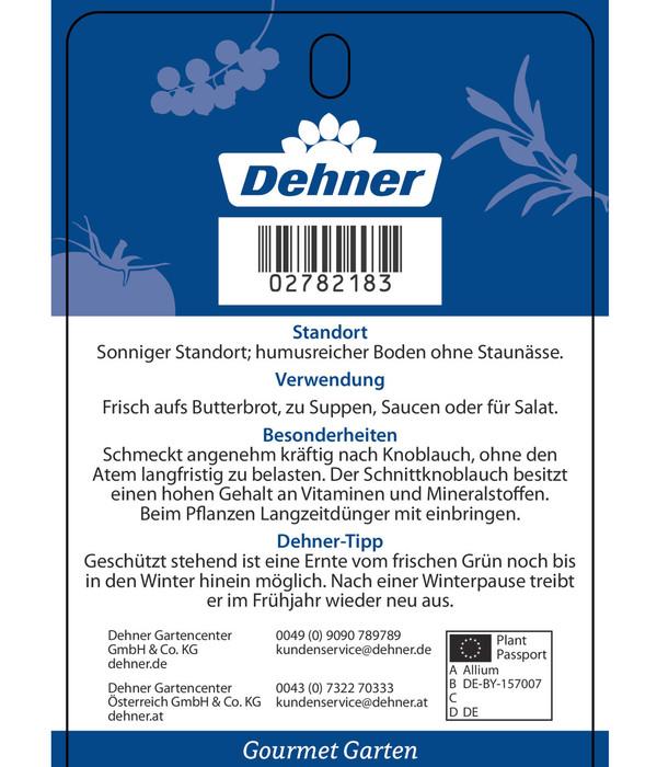 Dehner Gourmet Garten Schnittknoblauch 'Aglio'