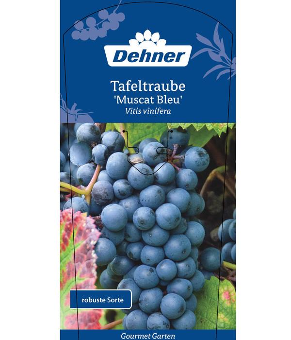 Dehner Gourmet Garten Tafeltraube 'Muscat Bleu'