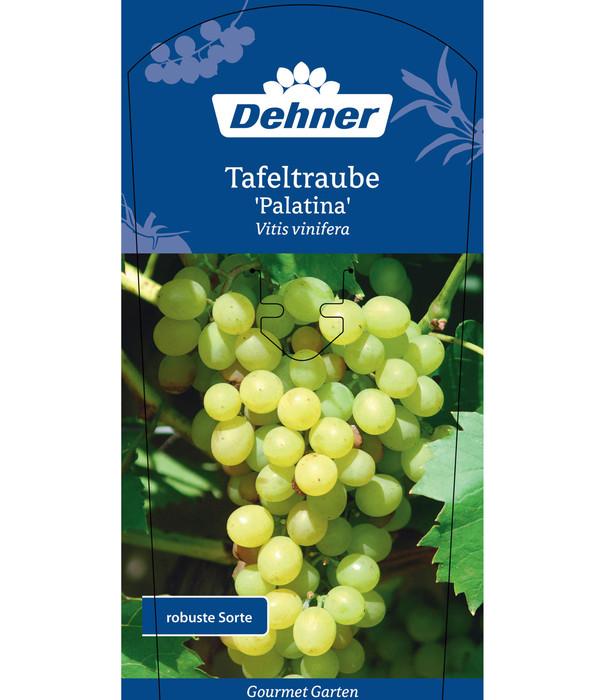 Dehner Gourmet Garten Tafeltraube 'Palatina'