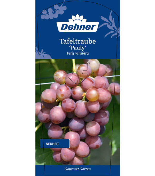 Dehner Gourmet Garten Tafeltraube 'Pauly'