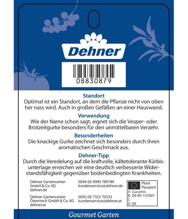 Dehner Gourmet Garten Vespergurke 'Printo', veredelt