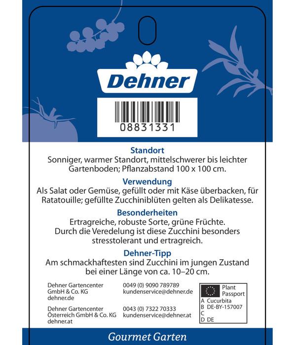 Dehner Gourmet Garten Zucchini, veredelt