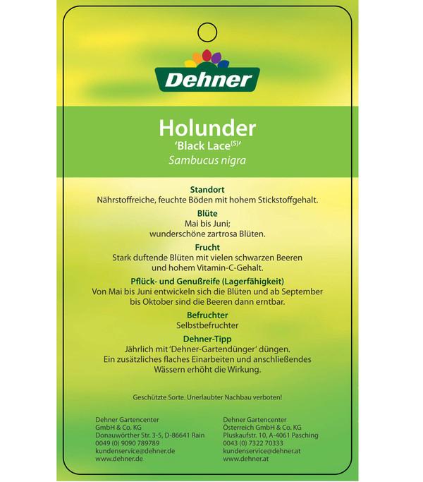 Dehner Holunder 'Black Lace'