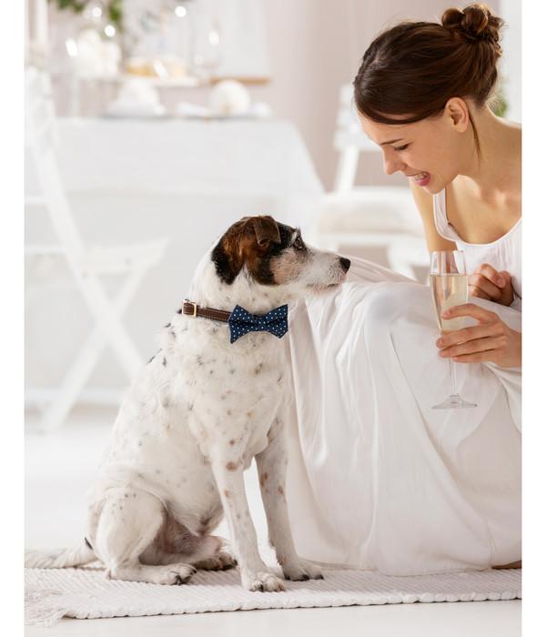 Dehner Hundefliege Gala