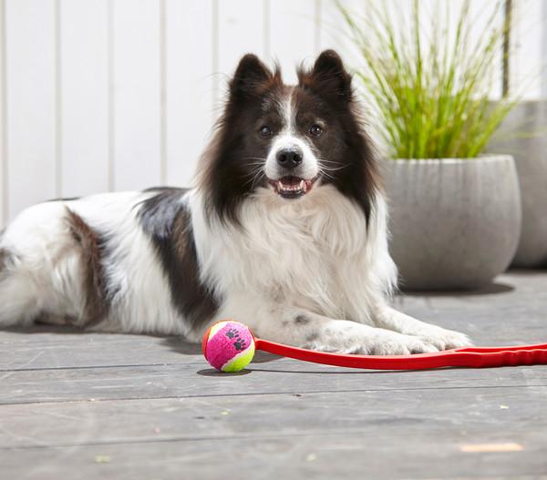 Dehner Hundespielzeug Ballschleuder fling & grab