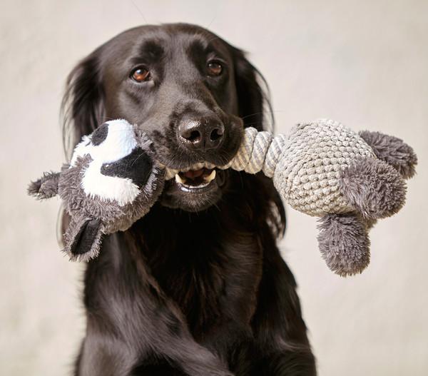 Dehner Hundespielzeug Racoon
