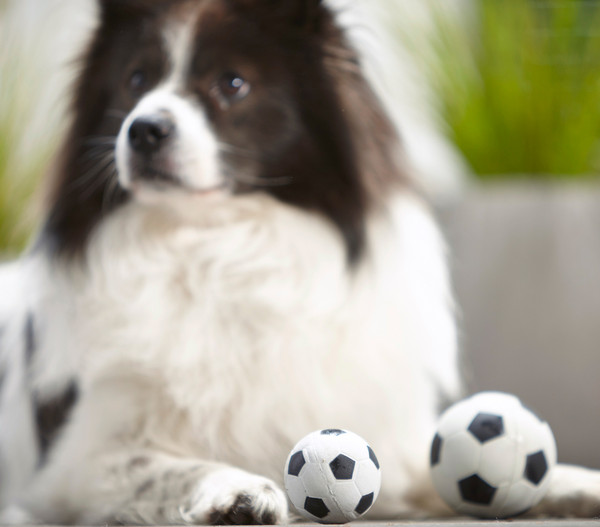 Dehner Hundespielzeug Spielball 'Sporty'