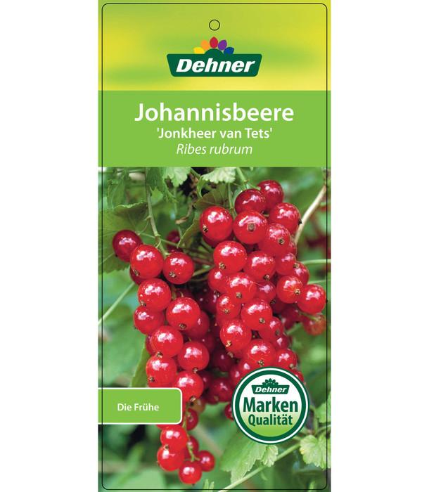 Dehner Johannisbeere 'Jonkher van Tets'