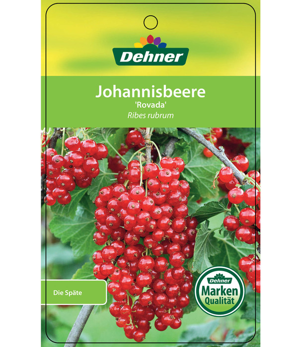 Dehner Johannisbeere 'Rovada'