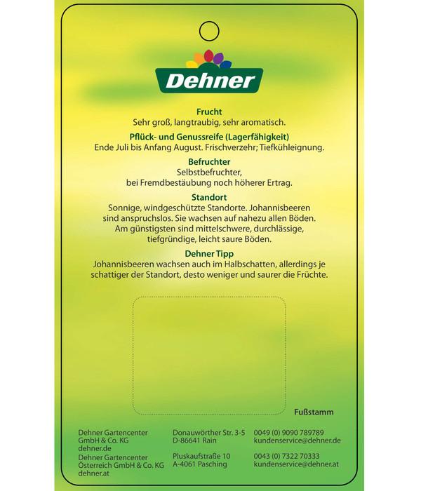 Top Dehner Johannisbeere 'Rovada' | Dehner &NP_07