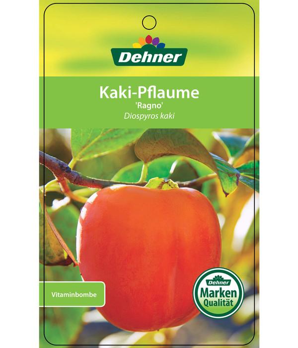 Dehner Kaki 'Ragno' - Kaki-Pflaume 'Ragno'