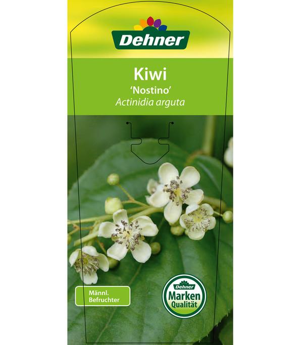 Dehner Kiwi 'Nostino', männlich