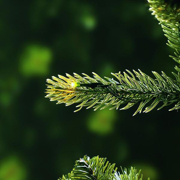 Dehner künstlicher Weihnachtsbaum 'Finja' mit LED-Beleuchtung, 240 cm