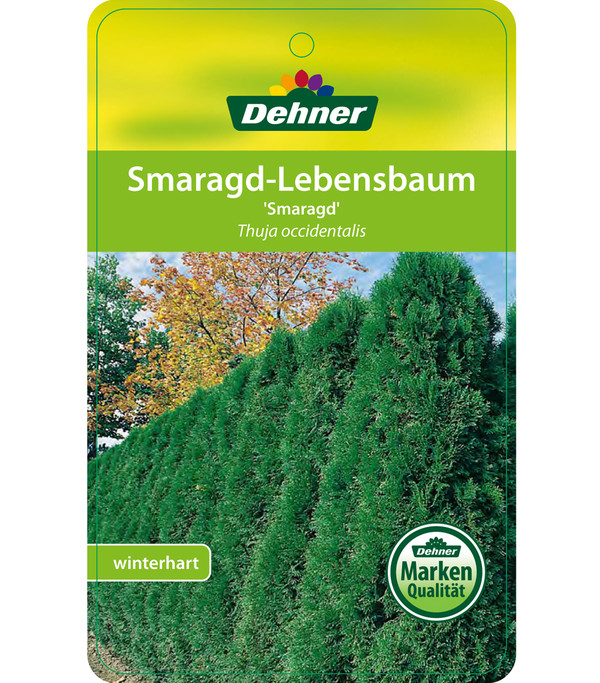 dehner lebensbaum 39 smaragd 39 halbstamm dehner. Black Bedroom Furniture Sets. Home Design Ideas