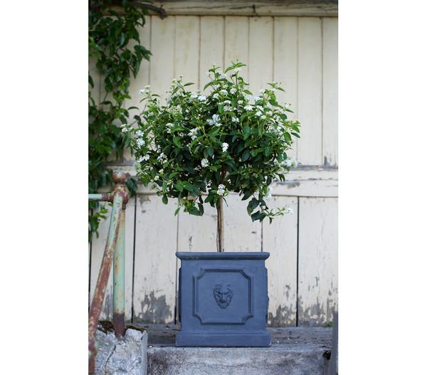 Dehner Leichtbeton-Pflanztopf, antik-schwarz