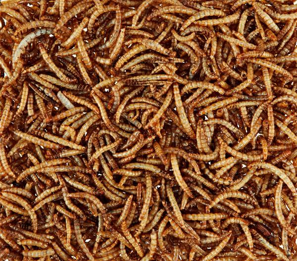 Dehner Mehlwürmer getrocknet, 520 ml