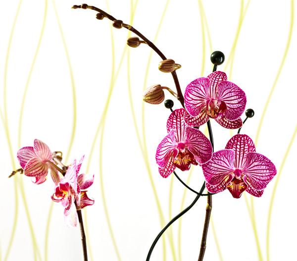 Dehner Metall-Orchideenstütze, Wellenform, grün, 55 cm