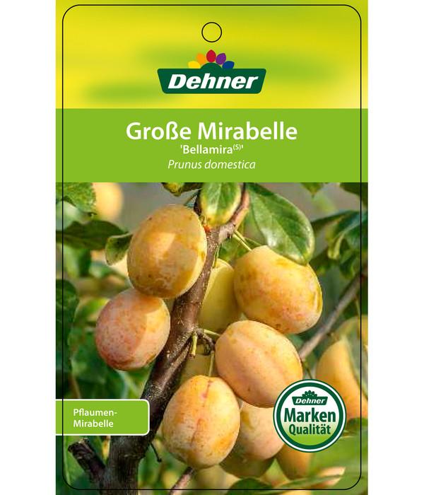 Dehner Mirabelle 'Bellamira'