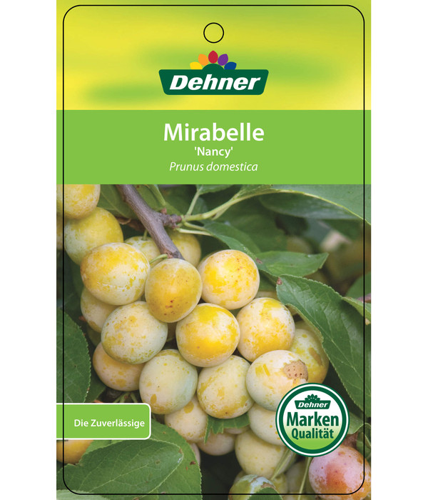 Dehner Mirabelle 'Nancy'