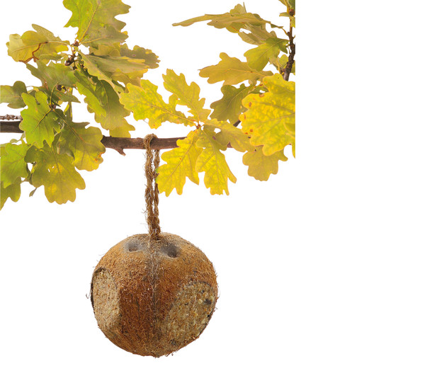 Dehner Natura Kokosnuss, mit Vogelfutter