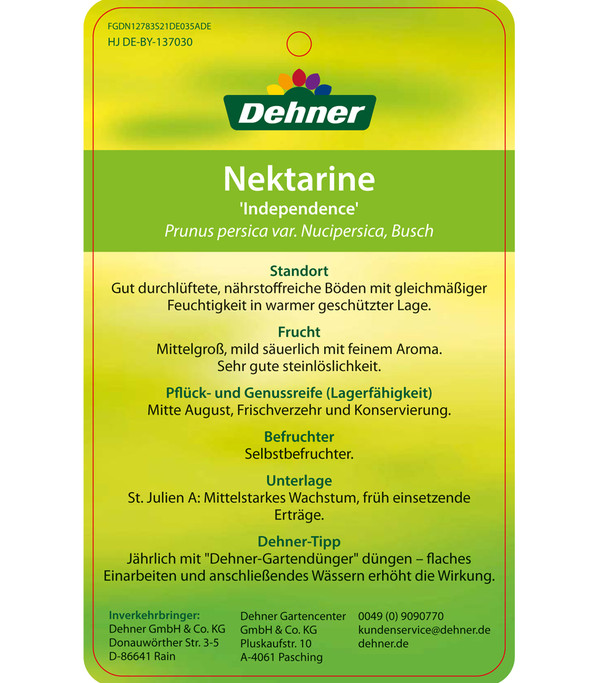 Dehner Nektarine 'Independence'