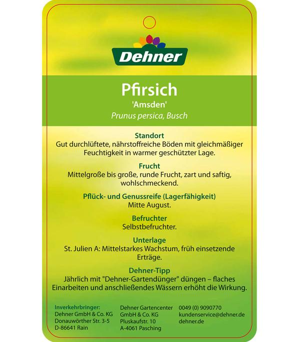 Dehner Pfirsich 'Amsden'