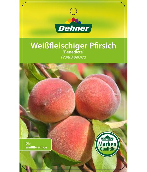 Dehner Pfirsich 'Benedicte'