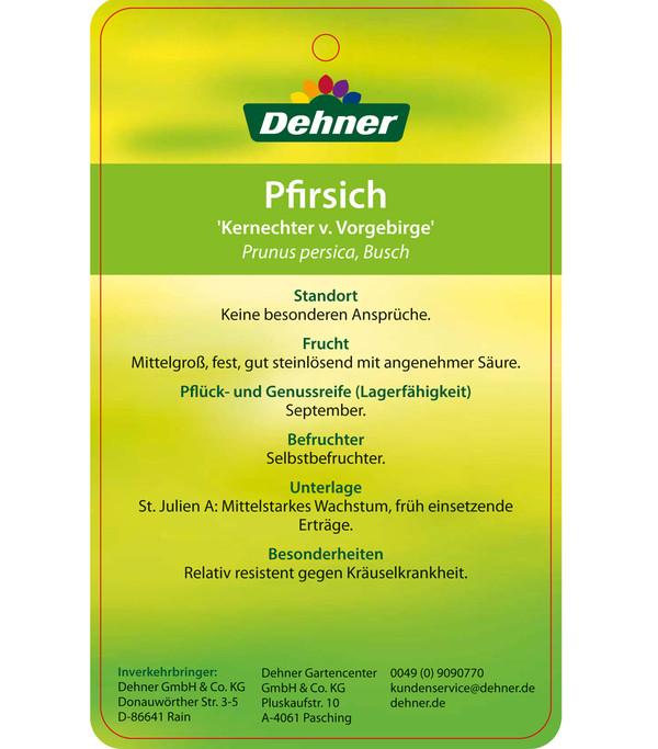 Dehner Pfirsich 'Kernechter vom Vorgebirge'
