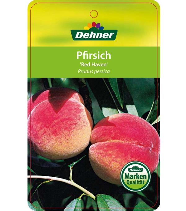 Dehner Pfirsich 'Red Haven'