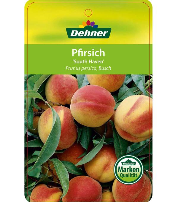 Dehner Pfirsich 'South Haven'