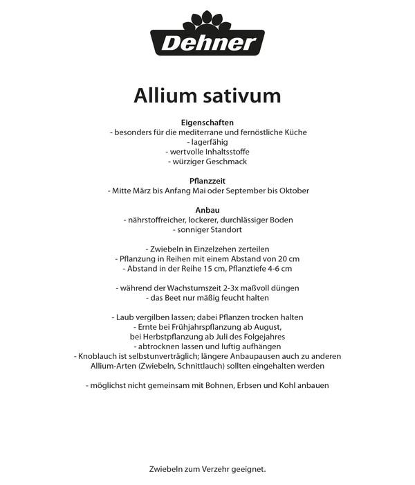 Dehner Pflanzknoblauch