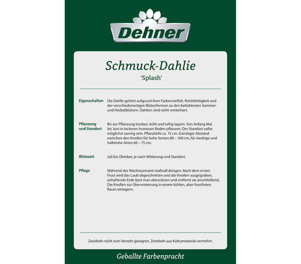 Dehner Premium Blumenzwiebel Schmuck Dahlie 'Splash'