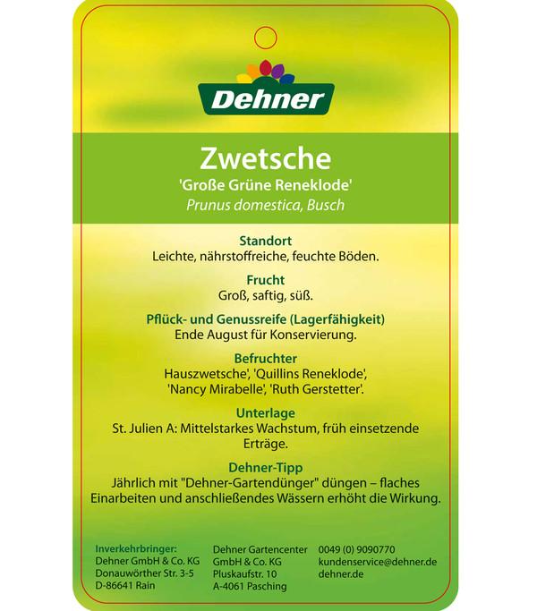 Dehner Reneklode 'Große Grüne Reneklode'