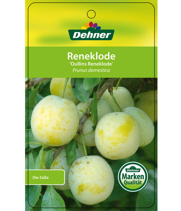 Dehner Reneklode 'Oullins Reneklode'