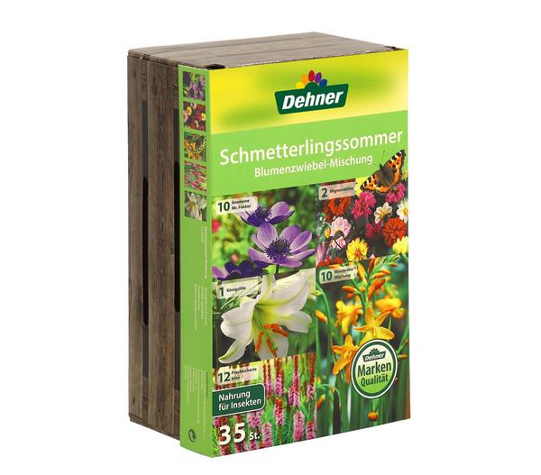 Dehner Schmetterlingssommer Blumenzwiebel-Mischung