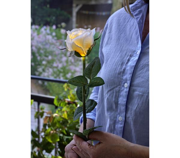 Dehner Solarblume 'Rose'